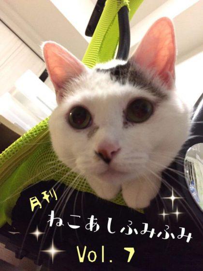 月刊ねこあしふみふみ Vol.7